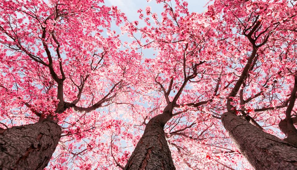 primavera-cambio-di-stagione